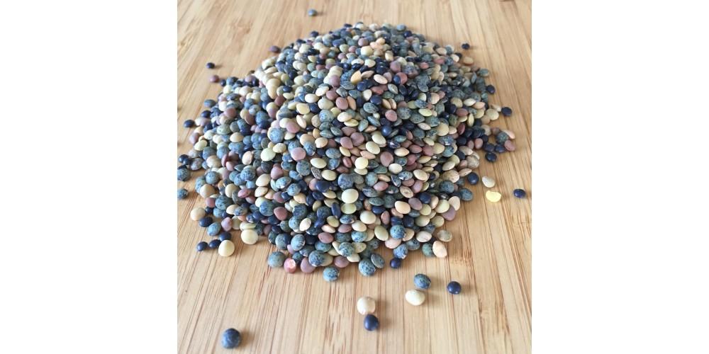 Lentilles variées bio à germer