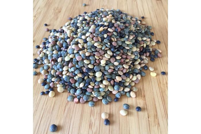 Lentils mix organic seeds