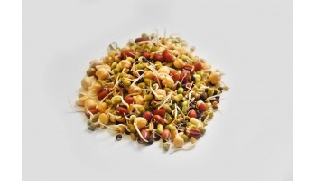 ORGANIC SPROUTED BEANS GRAINS & LENTILS