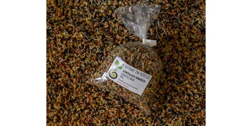 Lentils mix organic sprouts