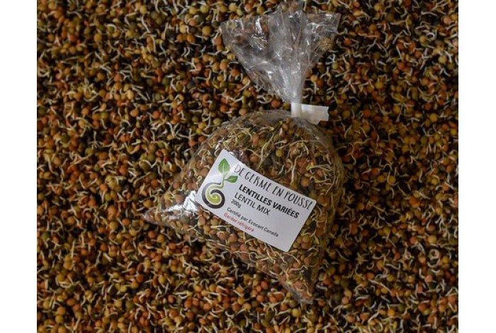 Sprouted lentils mix, bagged, 200g size